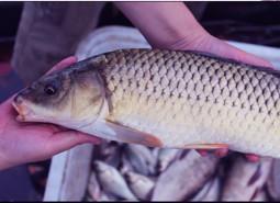 宁夏银川鲤鱼肉80平米冷库设计安装工程建造方案