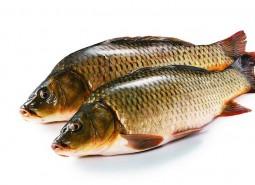 甘肃武威重兴麻辣鱼50平米鱼肉冷库设计安装工程建造方案