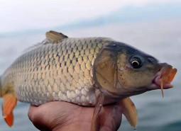 甘肃酒泉双塔鱼180平米鱼肉冷库设计安装工程建造方案