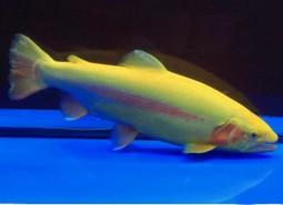 甘肃金昌永昌骊靬金鳟鱼500平米速冻冷库设计建造方案