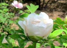 甘肃临夏河州牡丹800平米花卉(鲜花)保鲜冷库设计建造方案