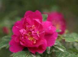 甘肃兰州苦水玫瑰600平米鲜花(花卉)保鲜冷库设计建造方案
