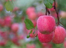 甘肃定西通渭县农业合作社100平方米苹果保鲜冷库建造工程