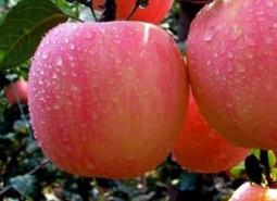 2020甘肃定西通渭县农业合作社50平方米苹果冷库安装工程