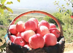 甘肃平凉庄浪苹果1500平米苹果保鲜冷库设计建造方案