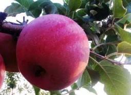 甘肃白银平川苹果150平米保鲜冷库设计建造方案