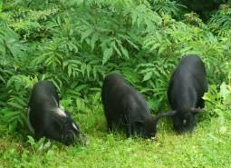 甘肃甘南迭部蕨麻猪肉1500平米冷冻库设计建造方案