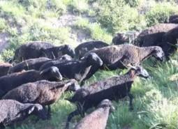 甘肃定西岷县黑紫羔羊肉2500平米冷库设计安装工程建造方案