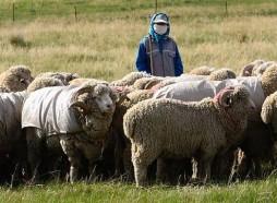 肃南甘肃高山细毛羊肉1000平米预冷库安装设计工程建造方案