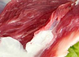 甘肃酒泉哈尔腾羊肉500平米冷冻库设计建造方案