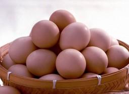宁夏吴忠盐池滩鸡蛋100平米冷库设计安装工程建造方案