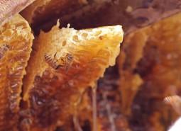 甘肃定西岷县蜂蜜800平米食品冷库设计建造方案